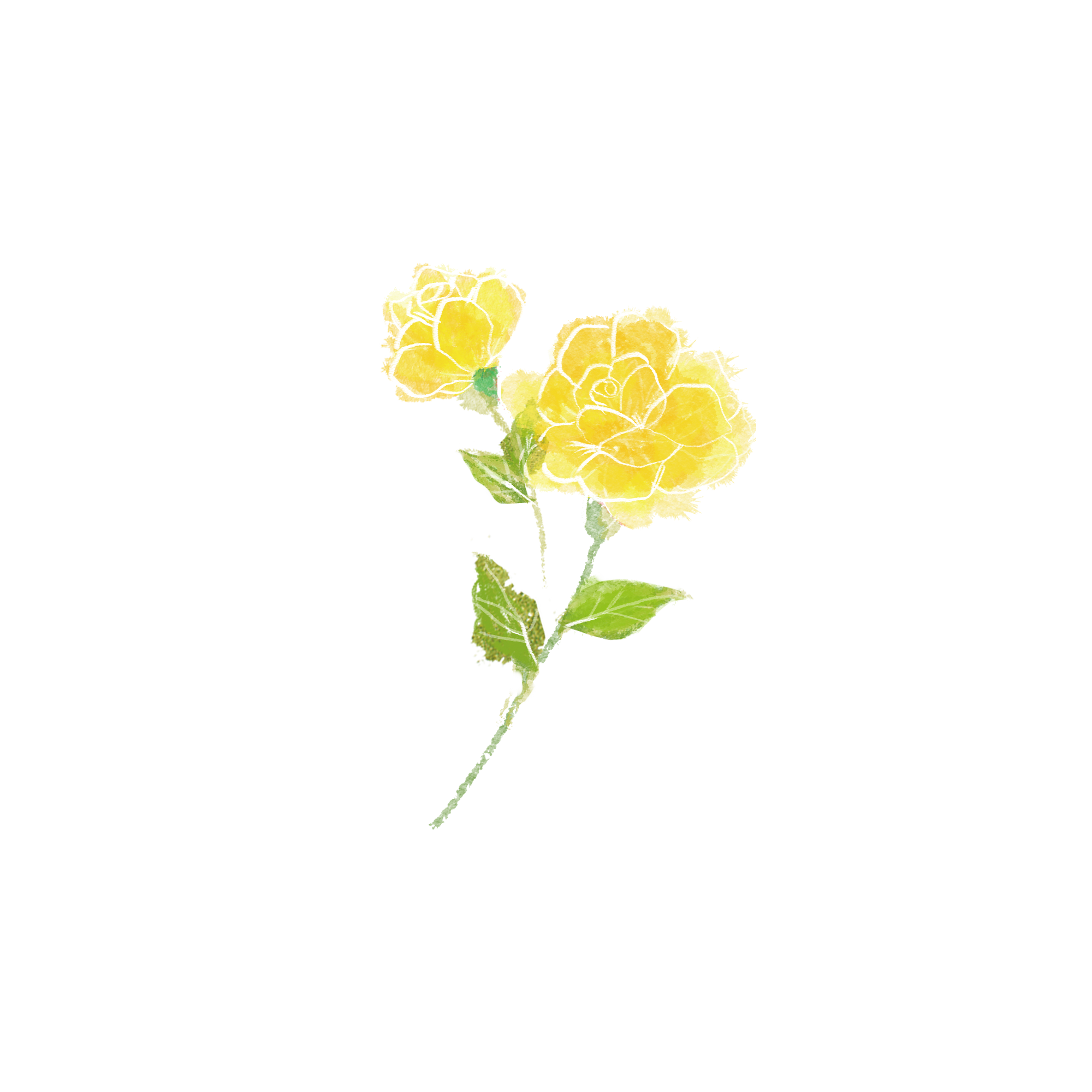 手描きした黄色いバラのイラスト イラスト素材館
